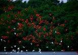 Caroni Swamp Bird Sanctuary Tour