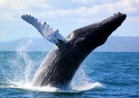 Full-Day Samana Whales Watching Season By Bus