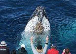 Spirit of Gold Coast Whale Watching Experience