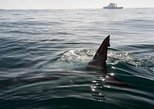 Shark Cage Diving Tour Helderberg and Grabouw