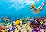 Puerto Morelos Reef Snorkeling Tour with Private Beach Club Lunch