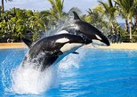 Day Trip to Loro Parque in Tenerife from Gran Canaria