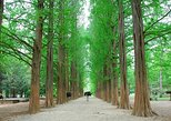 Full-Day Customizable Private Tour to Nami Island and surrounding Area