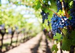 Private Full-Day Napa Valley Wine Tour From San Francisco