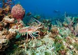 Lobster and Lion Fish Charter