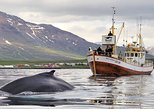 Whale Watching Tour from Hauganes
