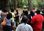 Lowcountry Island Plantation & Gullah Heritage Tour