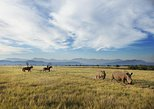 2-Hour Horse Safari at the Plettenberg Bay Game Reserve