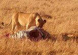 Full-Day Nairobi National Park, Giraffe Centre and City Sightseeing Tour