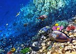 Snorkeling Tour from Roatan Island, Honduras