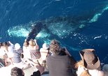 Newport Beach Whale and Dolphin Watching Cruise