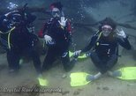 Try SCUBA Diving in Crystal River (pool or springs)