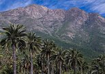 Darwin's Route: Traversing the Chilean Palm Forest