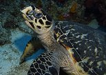 Snorkeling with Turtles, Nurse Sharks and Rays at Silk Caye
