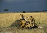3-Days, 2-Nights Kenya Meru Tour