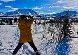 Denali Park Winter Experience