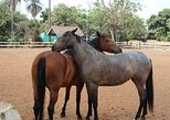 An Equestrian Experience - 1 Hour Horseback Riding with Pickup and Dropoff