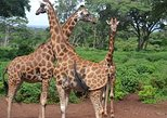 1 Day Nairobi City Tour