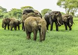 Tarangire National Park Guided Day Tour From Arusha