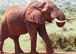3 Day Best of Tsavo East & Tsavo West Wildlife Safari From Mombasa