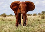 2-Day Tsavo East National Park Safari From Mombasa