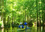 2-Hour Cypress Forest Guided Kayak Tour