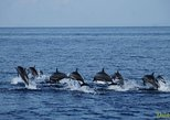 Bohol Pamilacan Island Dolphin Whale Watching Tour