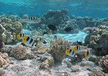 Bora Bora: Morning or Afternoon Snorkeling Cruise
