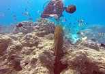 Bora Bora Scuba Diving: Private Intro or Certified One Tank Dive