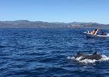 DOLPHINS WATCHING TOUR