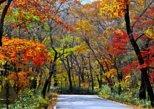 Breathtaking Gayasan Mountain (Haeinsa) Autumn Foliage Tour