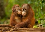 DAY TRIP ORANG-UTAN SEPILOK AND CITY TOUR