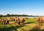 3 Days Tour to Kandy,Nuwara Eliya & Sigiriya from Colombo