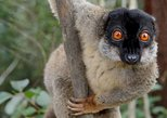 Lemur Day Tour at Andasibe Rainforest and Vakona Lodge Reserve