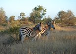 Kruger National Park - Closed Vehicle - Day Tour