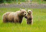 Bear Viewing Excursion and Airplane Adventure Tour