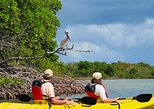 St Thomas Kayak Tour: Sunset Birding at Mangrove Lagoon