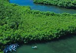 Best of Mangrove Lagoon Adventure