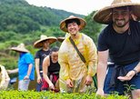 Discover Tea Culture with Master of Tea