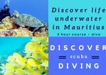 Discover Scuba Diving (beginners and children over 10 welcome)