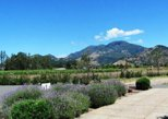 Full-Day Wine Country Bike and Wine Tasting Tour From Calistoga
