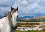 Connemara- Self walking- 7 days