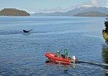Ketchikan Shore Excursion: Zodiac Boat Wilderness Adventure