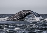 3-Hour Monterey Bay Winter Whale-Watching Tour in California