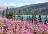Skagway Shore Excursion: Half-Day Tour to the Yukon Border and Suspension Bridge