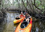 Mangrove Tunnels and Manatees Tour