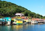 Roatan Shore Excursion: Mangrove Cruise