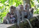 ATV Quad and Monkey Forest Ubud Tour