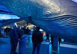 Ereignisreicher Wal-Tag: Land und Meer