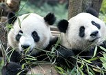 Asia - China: Half-Day Chengdu Panda Breeding Center Tour